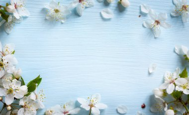 art spring background; fresh flower on blue background