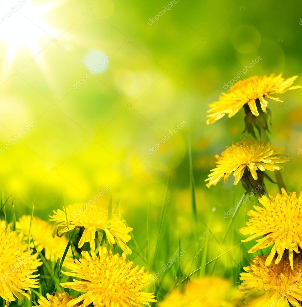 art spring flower background; fresh flower on green grass backgr