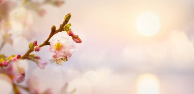Spring flower background; Easter landscape
