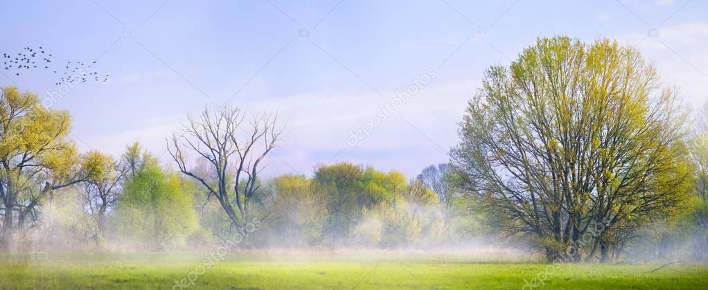 art Spring landscape; Easter background with blooming spring tre
