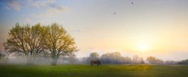 art Spring countryside landscape; morning farmland field and blo