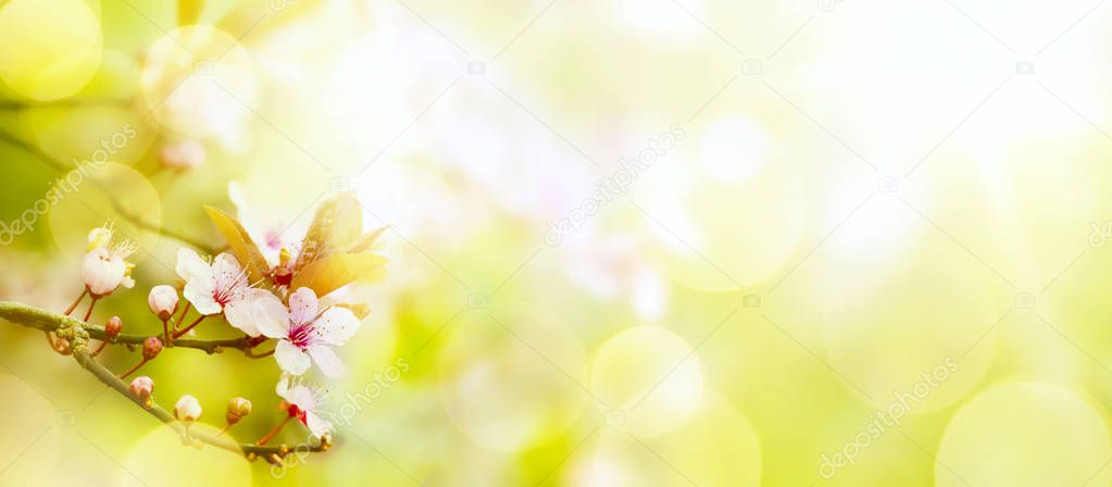 abstract Spring flower background; Easter landscape