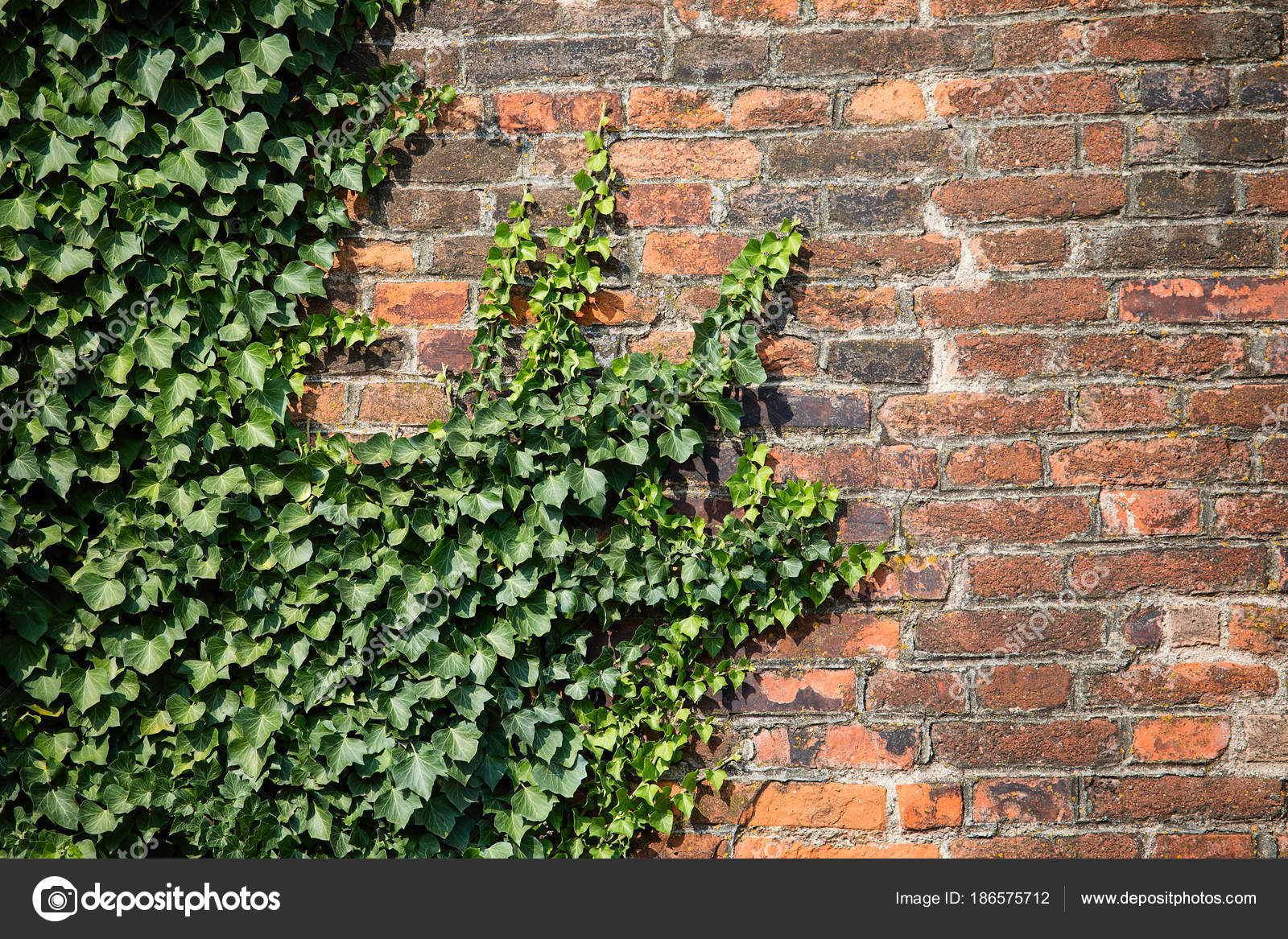Brick Wall Ivy | Genius Wallpapers