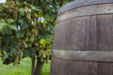 wine in barrel against grapevine