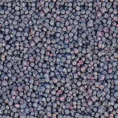 Seamless pattern of blackberries