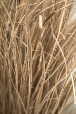 besom texture for background