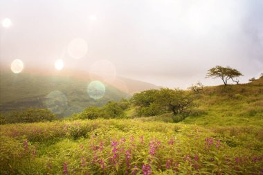 Salalah scenic fields