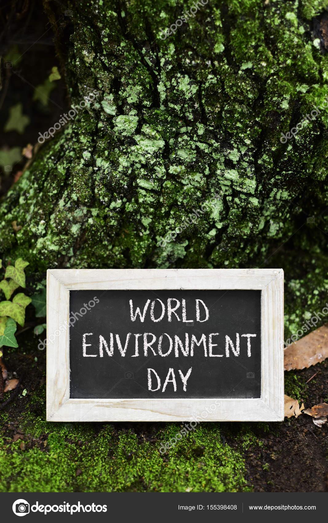 pizarra con el día mundial del medio ambiente de texto — Foto de ...