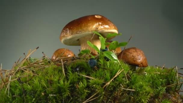 Mravence pobíhat houby a mech