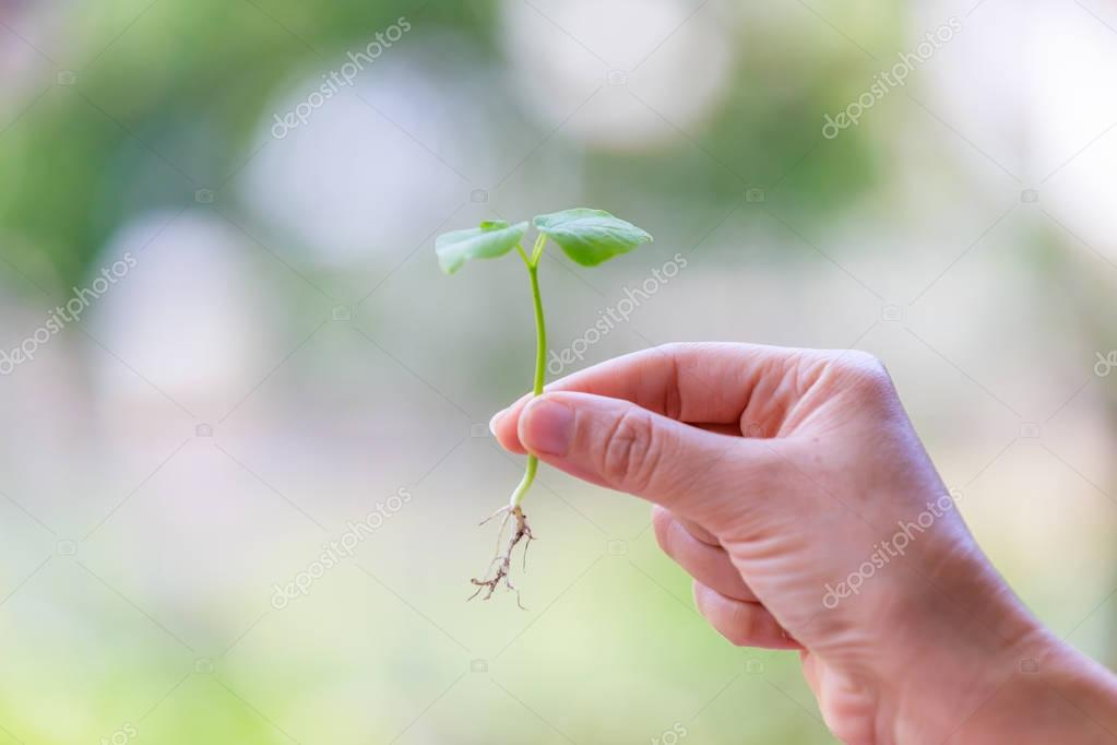 Hand catching, holding a sprout or seedling, concept of growth and prosperity.