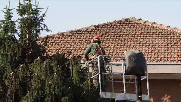 zahradník prořezávání stromu