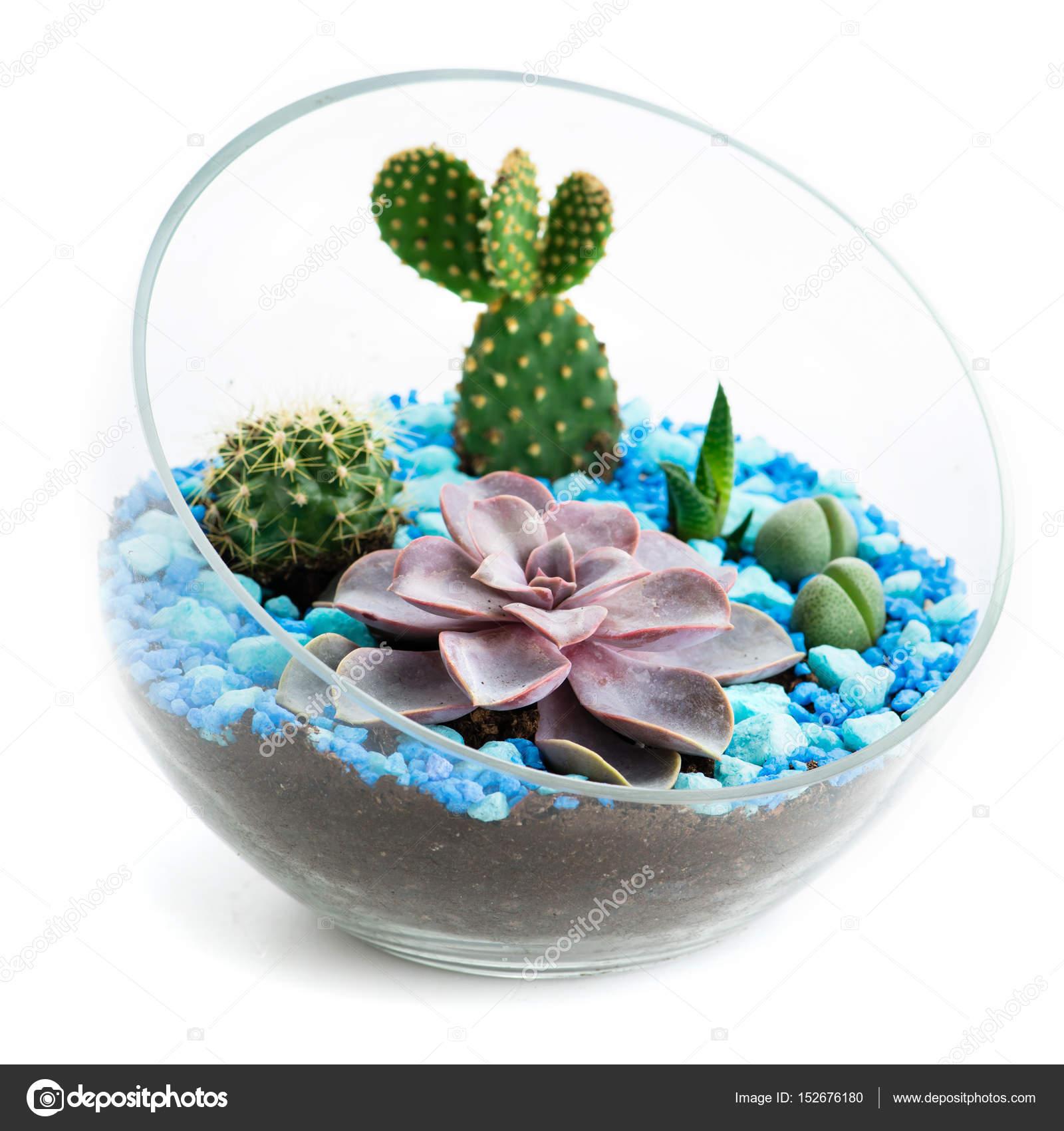 Florarium W Szklanych Doniczkach Z Kaktusy I Sukulenty