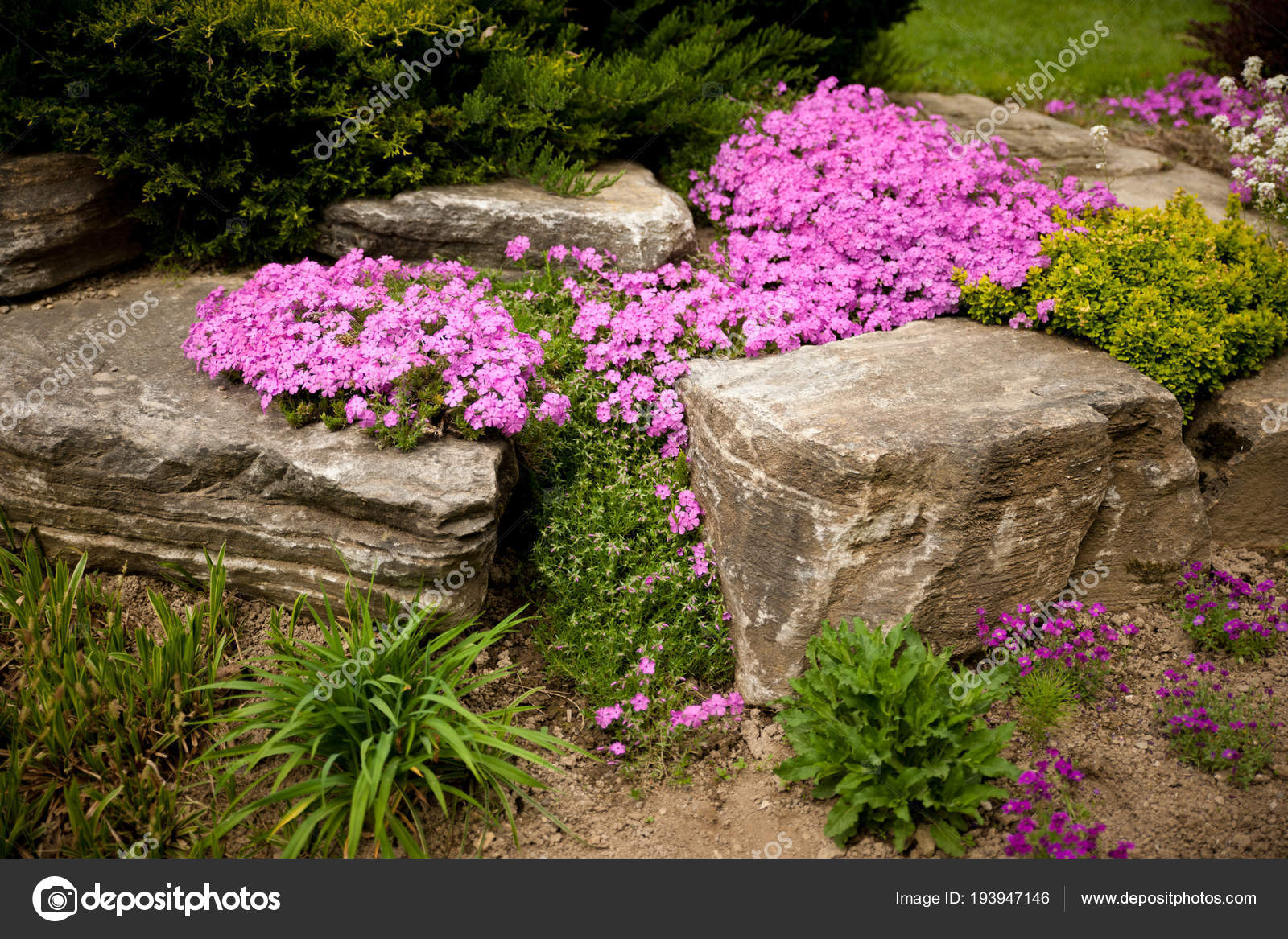 Flowering Rock Garden In Spring Different Bushes And Flowers Bl