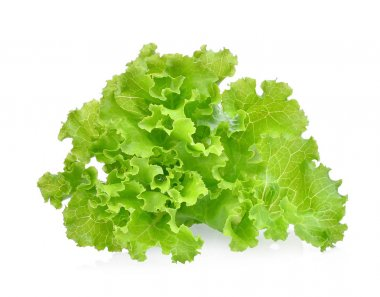 fresh green lettuce salad leaves isolated on white background.