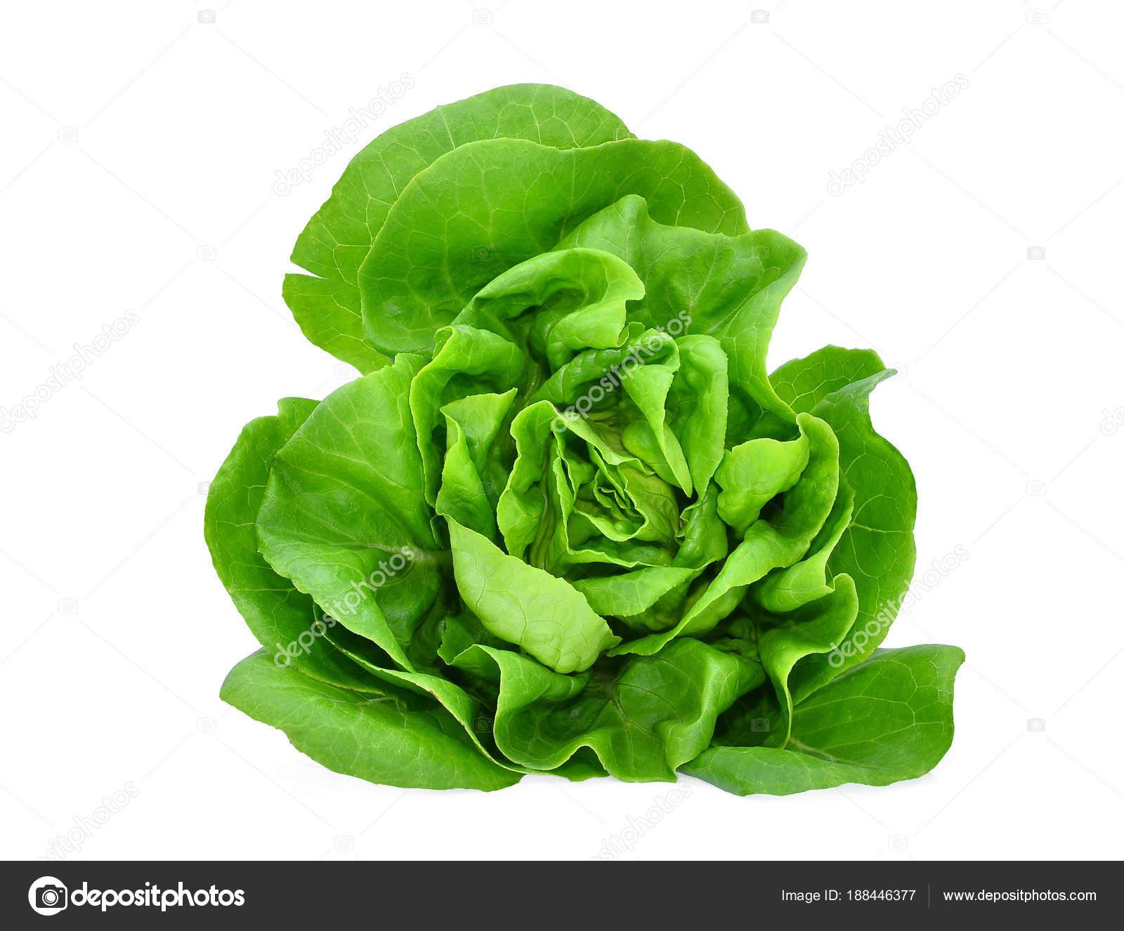 Green Butter Lettuce Vegetable Or Salad Isolated On White Back G