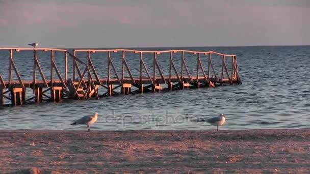 Přímořská krajina. Večerní slunce, ptáci spočívat na zábradlí na molo.