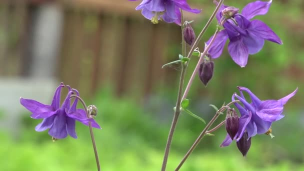 The fragrance of the fragrant meadow is the bells.The long-bell bells.