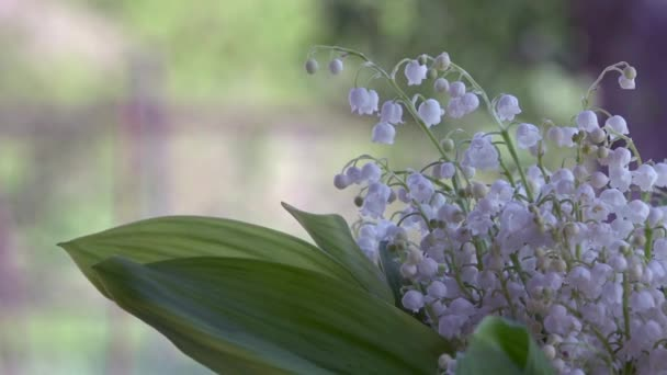 Lily of the valley - beautiful, fragrant, white, small flower.A fine, white, fragrant flower.