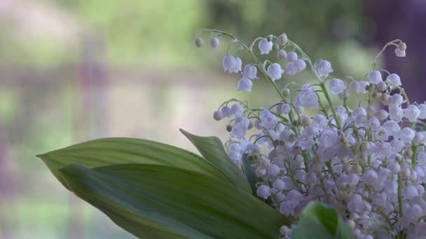 Lily Of The Valley - duftende, weiße, kleine Blume. Eine feine ...