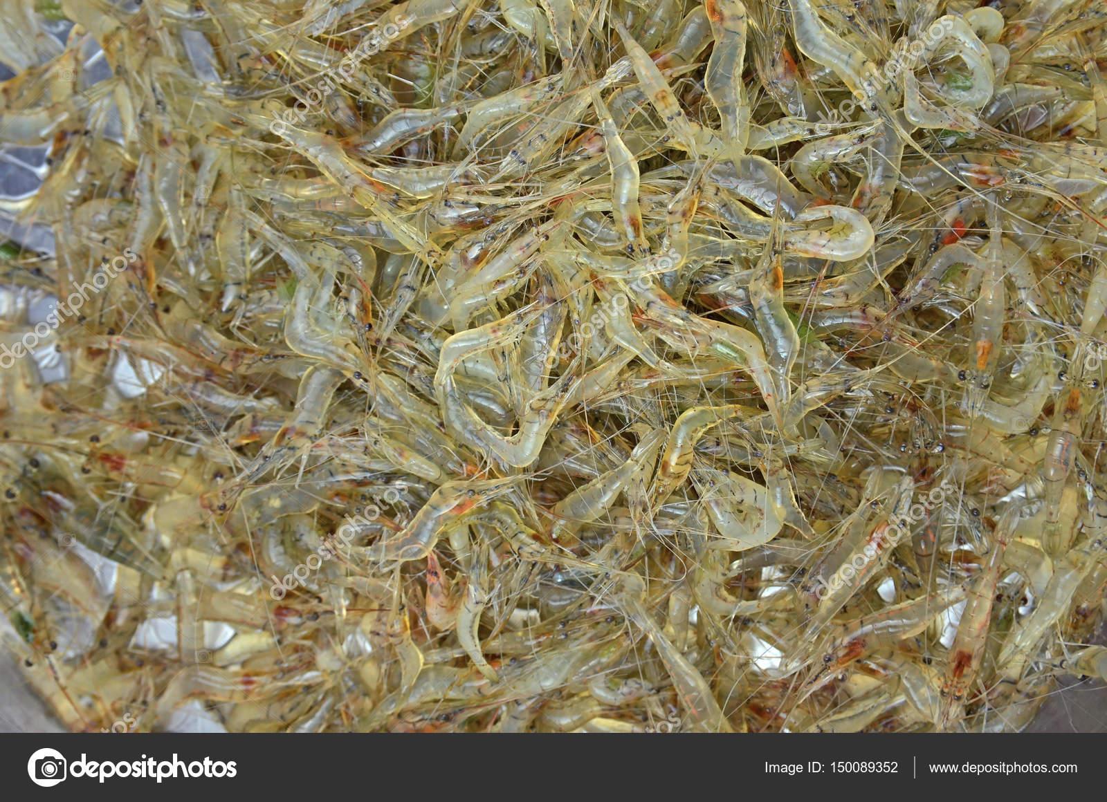 Many Shrimp Live Alive Stock Photo C Tskstock 150089352