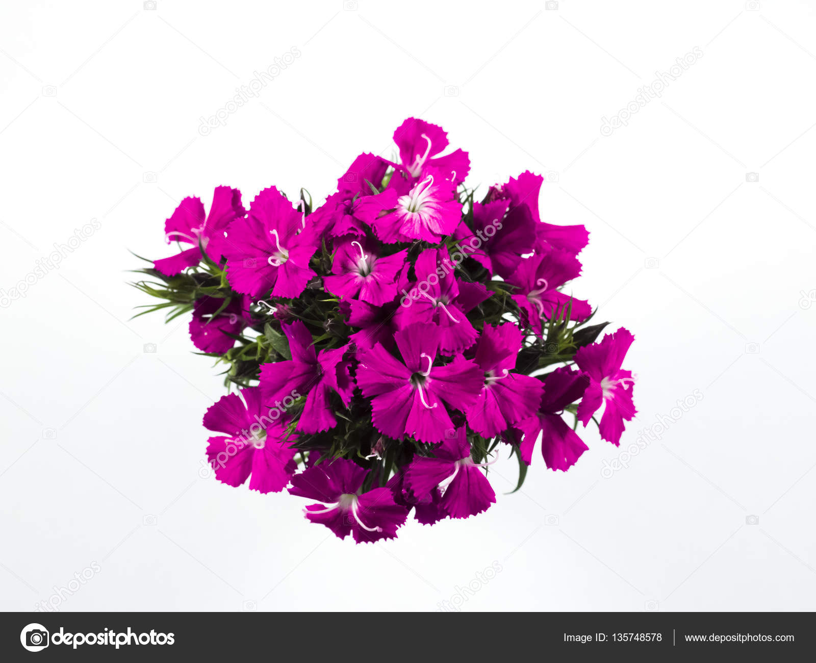 Beautiful pink flowers on white background stock photo urickung beautiful pink flowers on white background photo by urickungail mightylinksfo