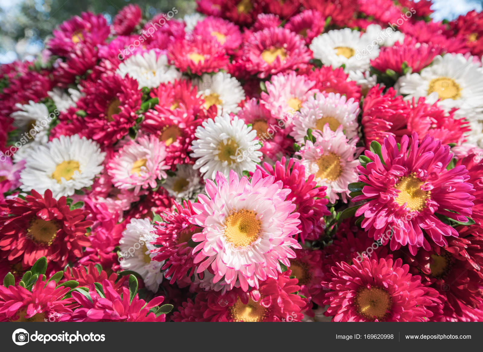 Colorful flowers background for sale at the wholesale flower mar ...