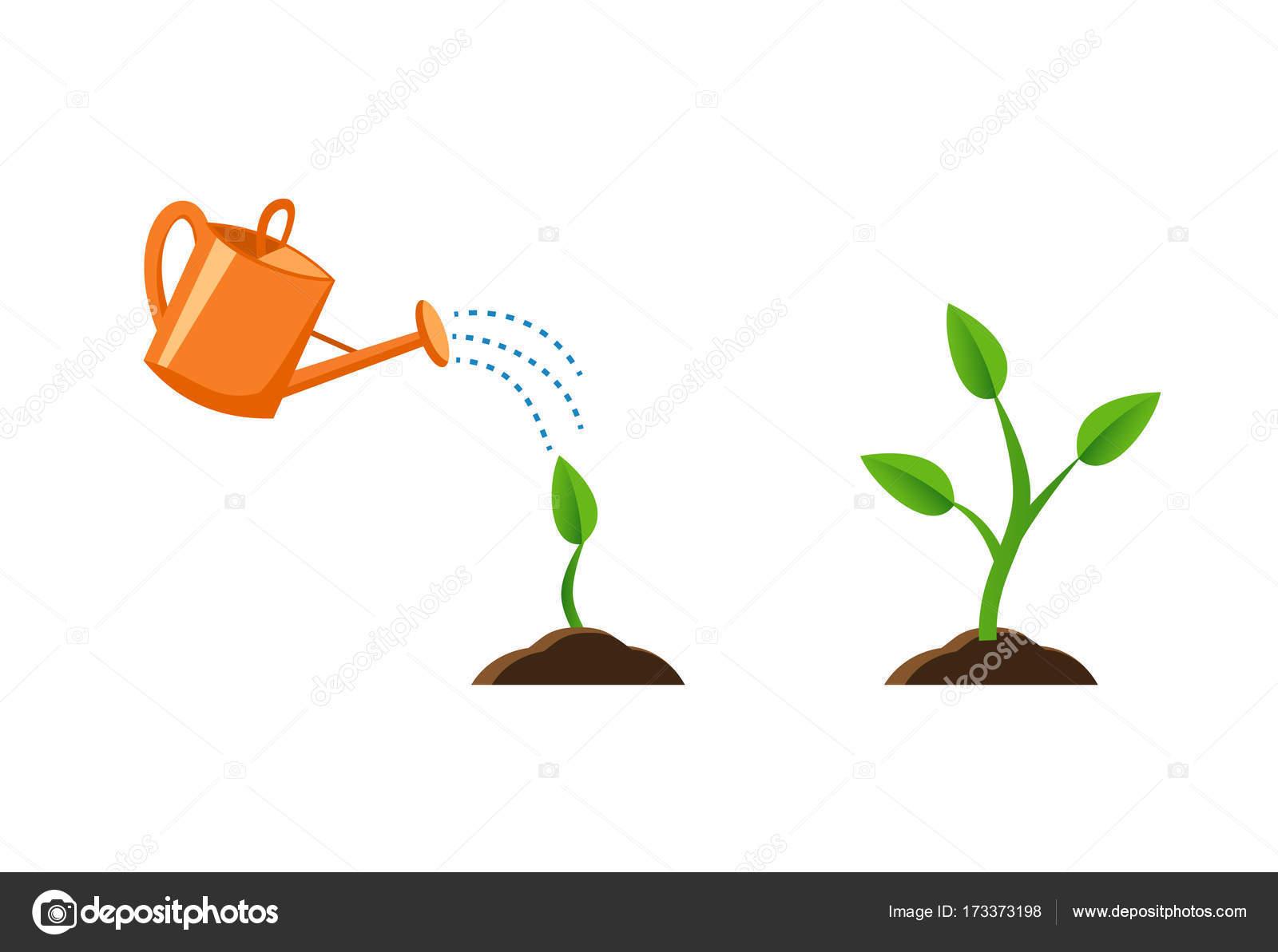 Illustrations Avec Phases La Croissance Des Plantes Image