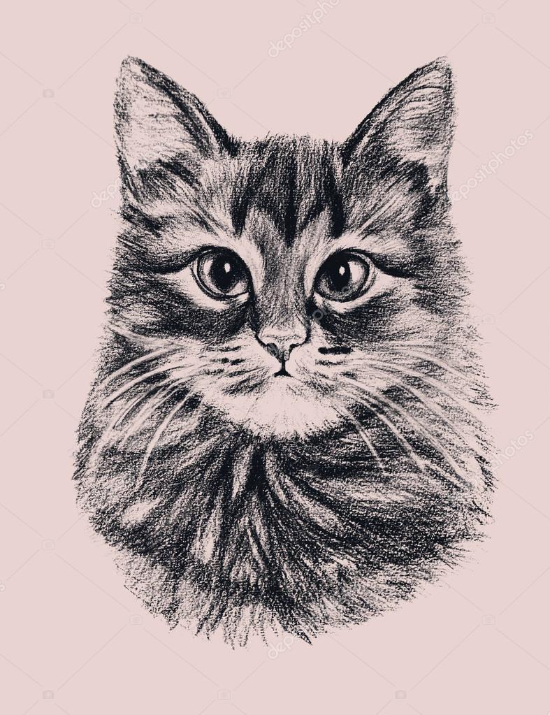 Imágenes Gatos Dibujados A Lapiz Gato Dibujado Mano Foto De