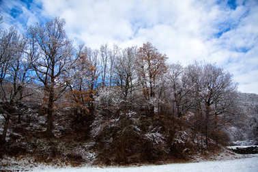 Winter mountains, lanscape with trees and snow.