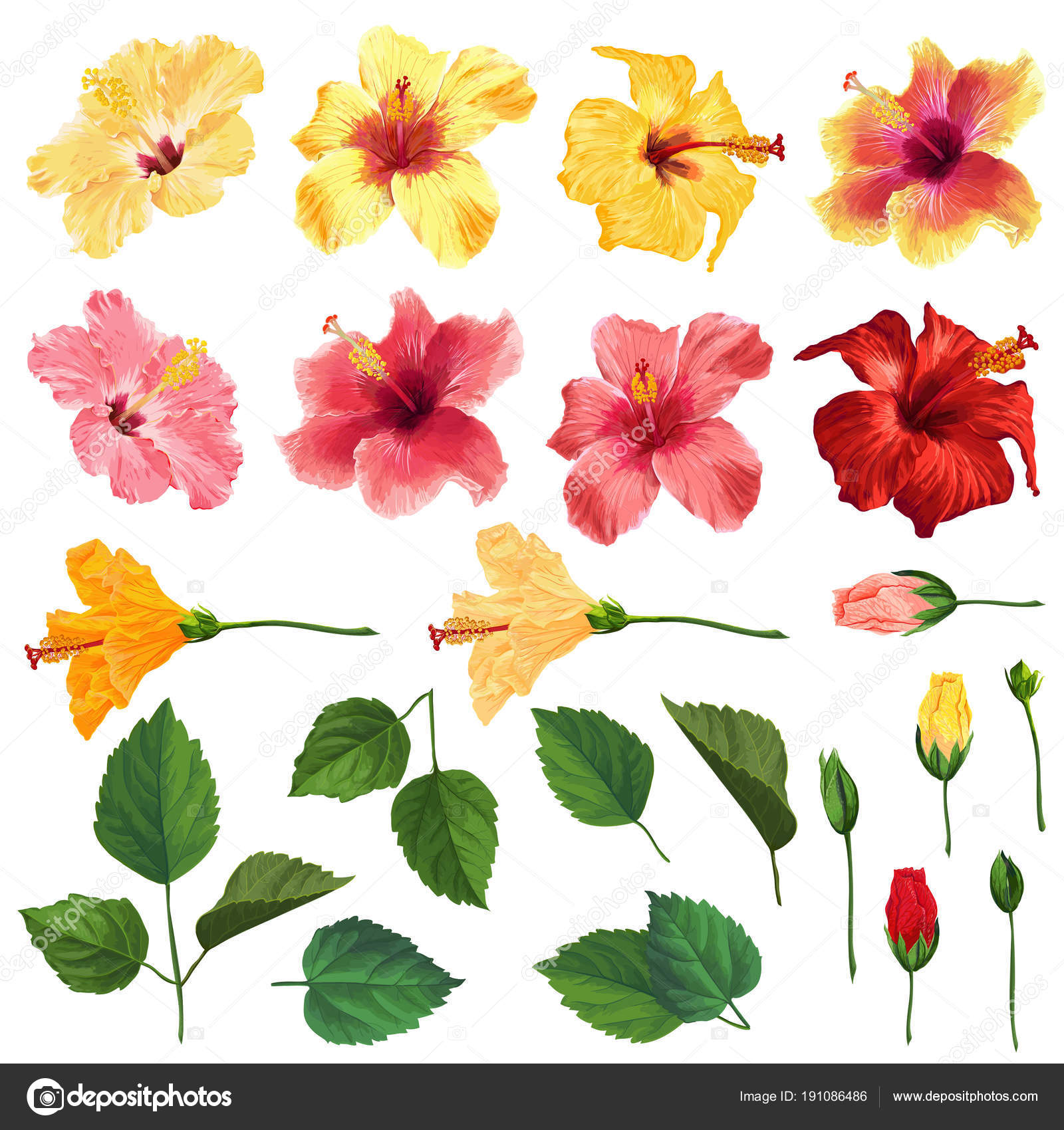 Hibiscus Floral Set With Flowers Leaves And Branches Watercolor
