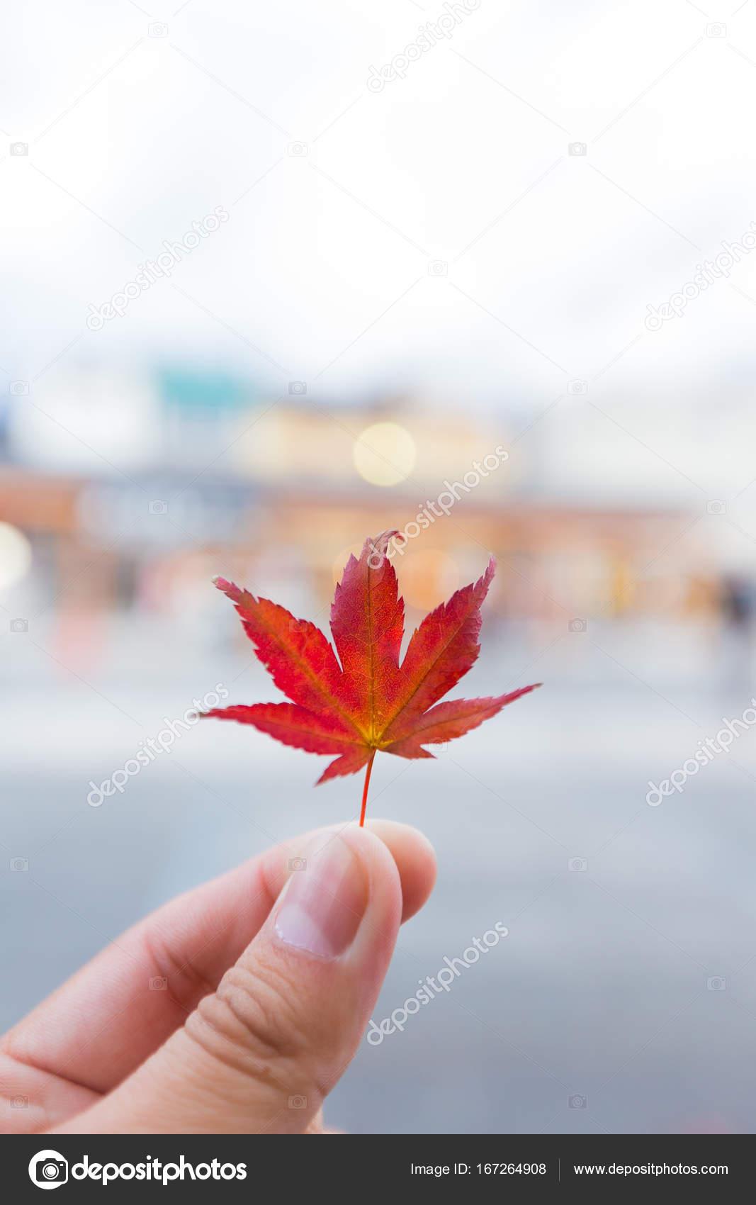 Hojas de otoño cambian de color en el invierno — Foto de stock ...