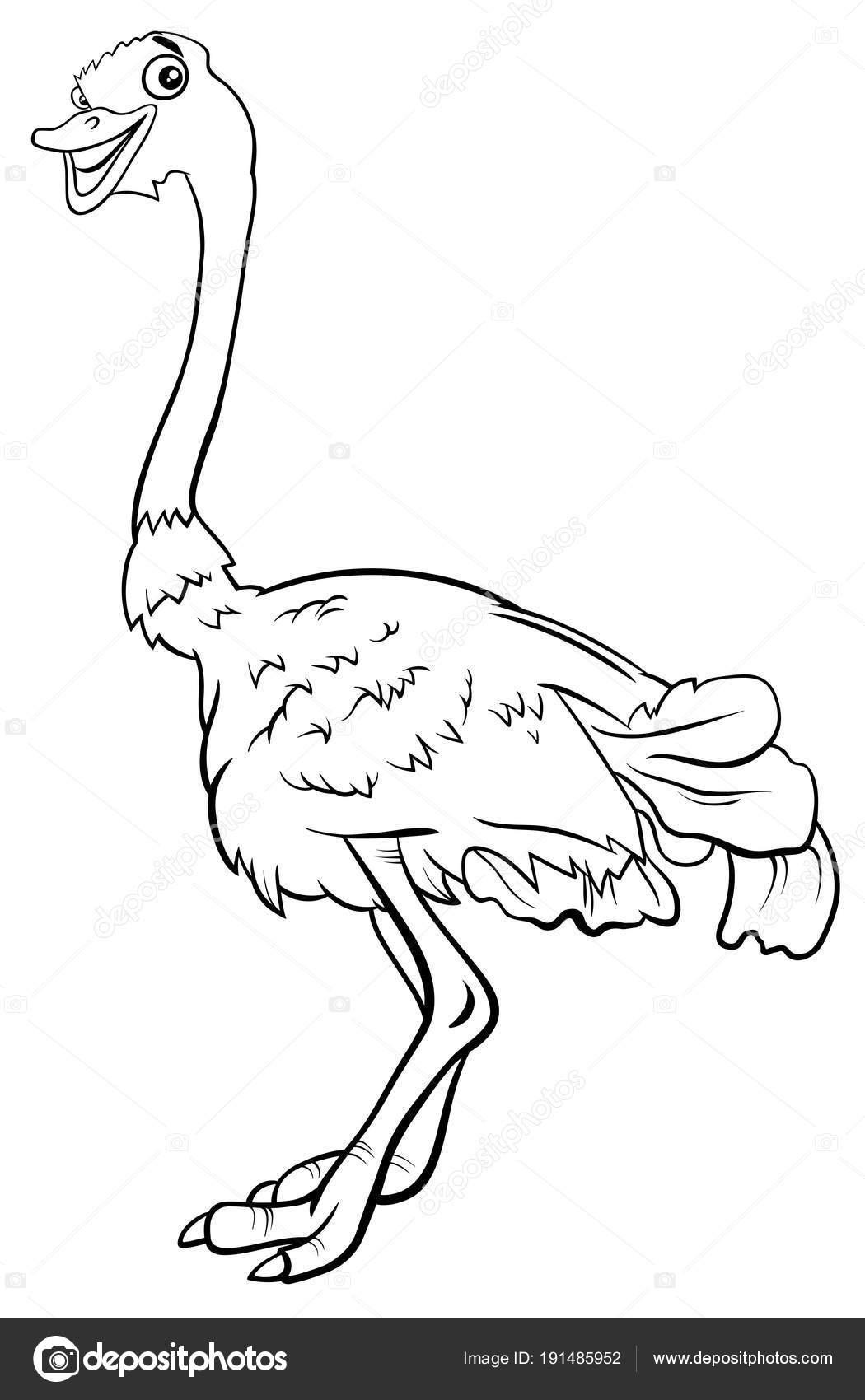 Devekuşu Boyama Kitabı Hayvan Karakter Karikatür Kuş Stok Vektör