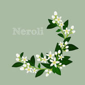 Orange blossom, flowers, buds and leaves. Floral design card with neroli.