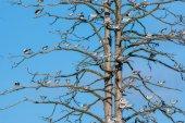 Möwen auf dem Frühlingsbaum