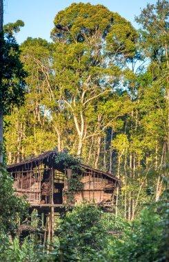 Traditional Korowai house