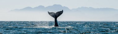 Seascape with Whale tail