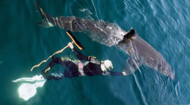 The swimmer with a mop near a Great white shark