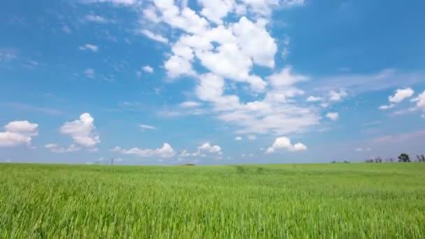 Zelené pole a oblačná obloha