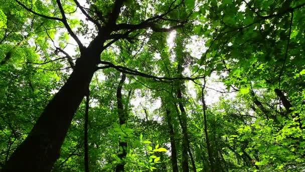Morgen in einem Wald