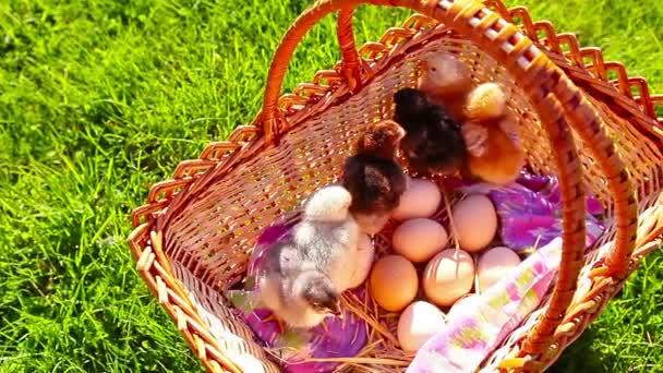 kis csirke egy kosárban egy zöld fűben