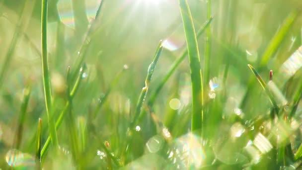 kapky rosy na zelené trávě