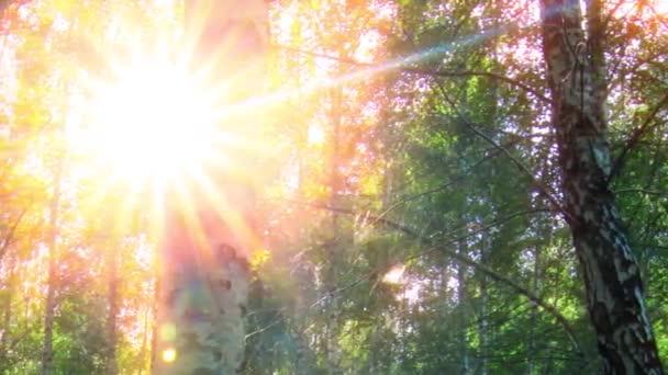 břízový les. čas vypršel. západ slunce.