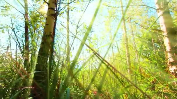 Morgen in einem Wald. Sommerlandschaft