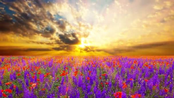field of flowers and the cloudy sky.