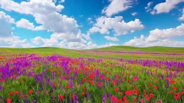 pole květin a zatažená obloha