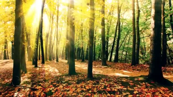 sluneční svit mezi stromy lesa. 4K.
