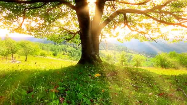 osamělý strom na pozadí horské scenérie