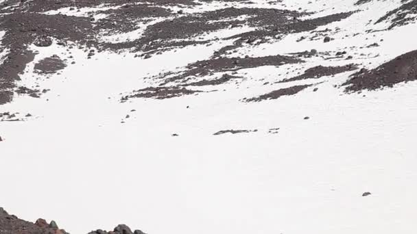 Orel v horském údolí