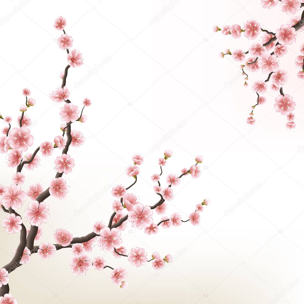 Blossoming branch of sakura. EPS 10