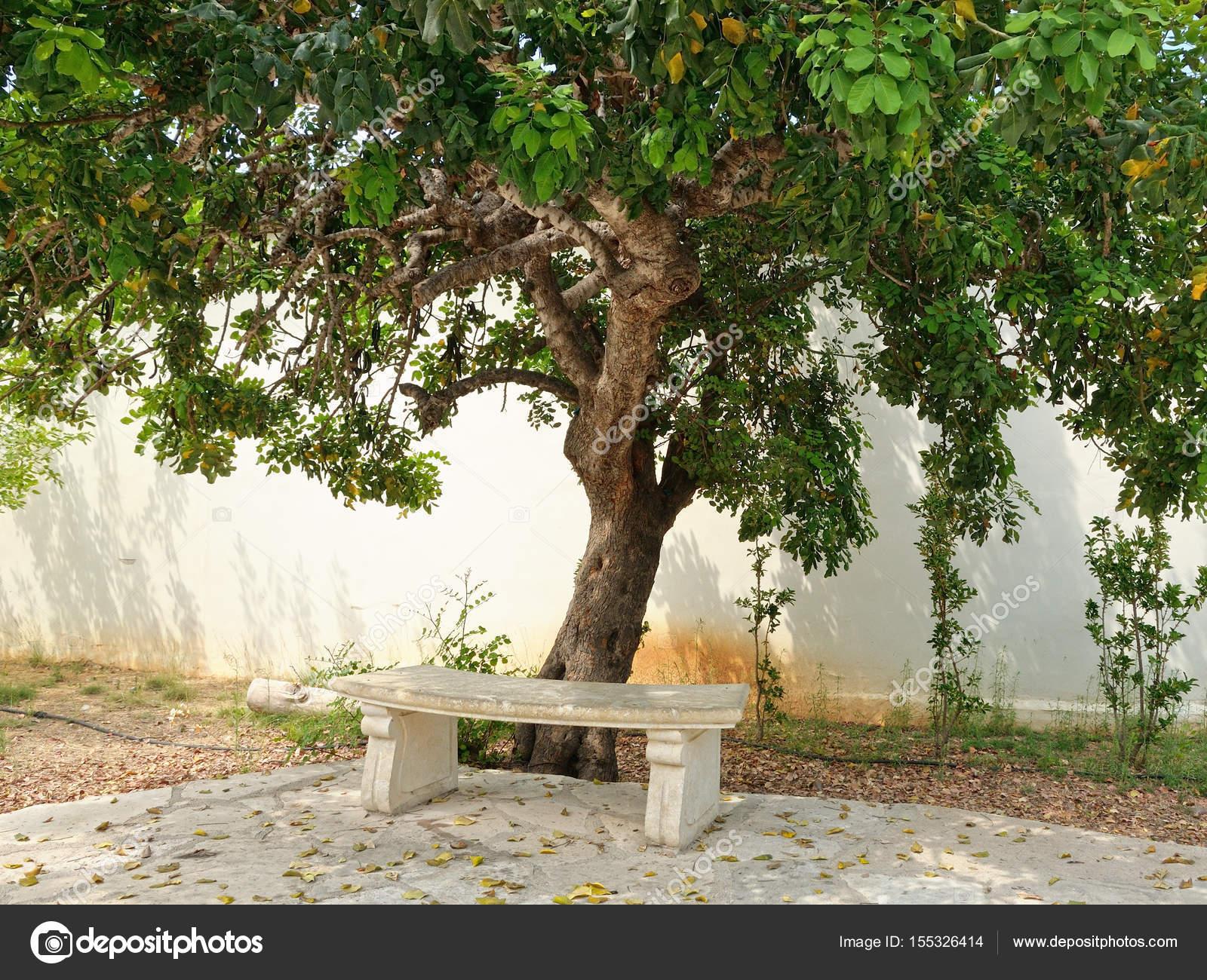 banc de pierre sous l'arbre — photographie windujedi © #155326414